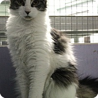 Adopt A Pet :: Victor - Mission, BC