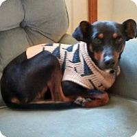 Adopt A Pet :: Shelby 2 - richmond, VA