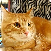 Adopt A Pet :: Patrick - College Station, TX
