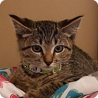 Adopt A Pet :: Echo - Trevose, PA