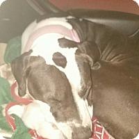 Adopt A Pet :: Daisy - Sioux Falls, SD