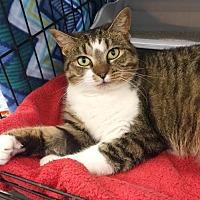 Adopt A Pet :: CeCe/Marina - White Bluff, TN