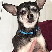 Adopt A Pet :: Dixon - Knoxville, TN