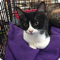 Adopt A Pet :: Wand - Hammond, LA