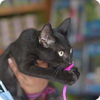 Adopt A Pet :: Prozac - Brooklyn, NY