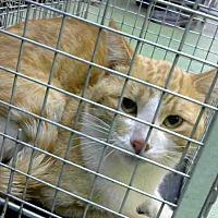 Adopt A Pet :: URGENT on 8/17 at DEVORE - San Bernardino, CA