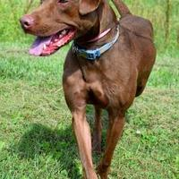 Adopt A Pet :: Woodrow - Westampton, NJ