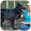 Photo 3 - German Shepherd Dog/Belgian Shepherd Mix Dog for adoption in Los Angeles, California - Faith von Gardiner