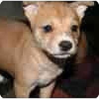 Adopt A Pet :: Rebel - Arlington, TX