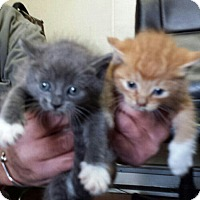 Adopt A Pet :: snooky - Whitestone, NY
