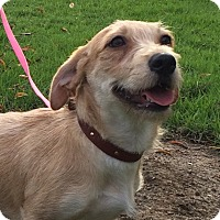 Adopt A Pet :: NICKY - Irvine, CA