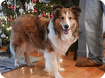 Collie Mix Dog for adoption in West Milford, New Jersey - COOPER-pending