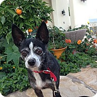 Adopt A Pet :: Lucky--No Adoption Fee! - Scottsdale, AZ