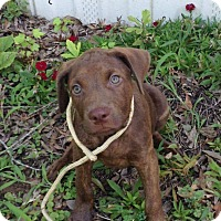 Adopt A Pet :: Dash - Manchester, NH