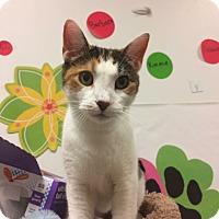 Adopt A Pet :: Calliope - Bensalem, PA
