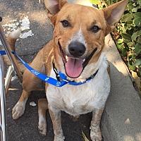 Adopt A Pet :: Zwei - Oakdale, CA