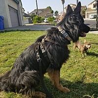 Adopt A Pet :: Kirsha - Martinez, CA