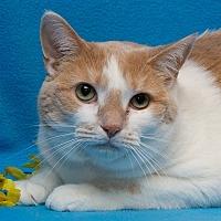 Adopt A Pet :: Molly - Westland, MI