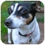 Photo 3 - Rat Terrier Dog for adoption in Portland, Oregon - Lizzie