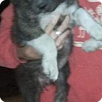 Adopt A Pet :: Tippy - Lancaster, OH