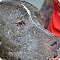 Adopt A Pet :: Quin - Miami, FL