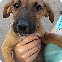 Adopt A Pet :: ZORRO - Inglewood, CA