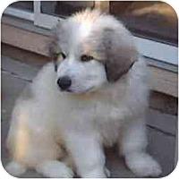 Adopt A Pet :: Polar-Purebred !! - Evansville, IN