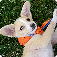 Adopt A Pet :: Sprout - Toluca Lake, CA