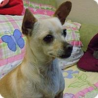 Adopt A Pet :: Pomona - Tumwater, WA