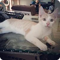 Adopt A Pet :: Kirby - Raleigh, NC