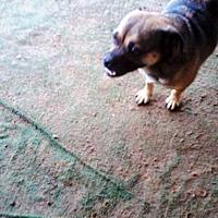 Adopt A Pet :: Chewy - Graceville, FL