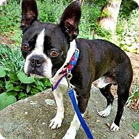 Adopt A Pet :: Rocco - ADOPTION PENDING - Greensboro, NC