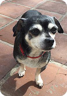Chihuahua Mix Dog for adoption in Los Angeles, California - Priscilla