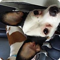 Adopt A Pet :: Titus - Westville, IN