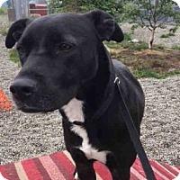 Adopt A Pet :: AXEL - Palmer, AK