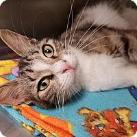 Adopt A Pet :: Nora - Umatilla, FL