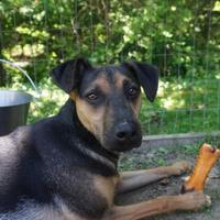 Adopt A Pet :: Pedro - Ashland, VA