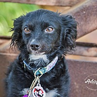 Adopt A Pet :: MONTY - Inland Empire, CA