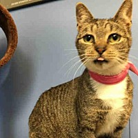Adopt A Pet :: COYOTE - Canfield, OH