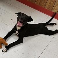 Adopt A Pet :: Reid Perry - Brooklyn, NY