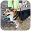 Photo 4 - Pembroke Welsh Corgi Dog for adoption in Inola, Oklahoma - Booker