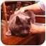 Photo 3 - Domestic Longhair Cat for adoption in Yorba Linda, California - Trixy