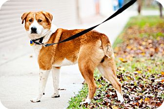 Collie Mix Dog for adoption in Houston, Texas - Fred