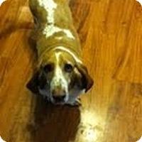 Adopt A Pet :: Baele - Council Bluffs, IA