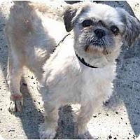 Adopt A Pet :: Oscar-NY - Edmeston, NY