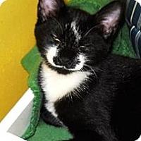 Adopt A Pet :: Jax - Mobile, AL