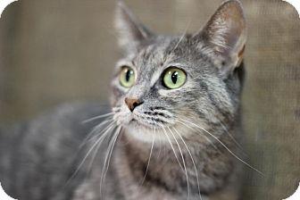 Domestic Shorthair Cat for adoption in Midland, Michigan - Sweetbriar - NO FEE