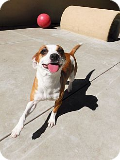 Terrier (Unknown Type, Small) Mix Dog for adoption in Dublin, California - Ava