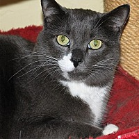 Adopt A Pet :: Vinnie - Prescott, AZ