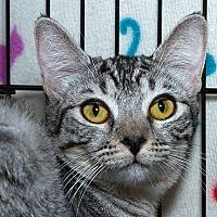 Adopt A Pet :: Venus B - Sacramento, CA